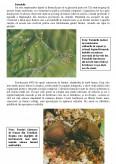 Imagine document Insecte Colonizatoare