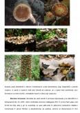 Imagine document Solutii pentru conservarea si reabilitarea elementelor structurale din lemn