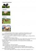 Plan de Afaceri - SC Eco Farm Land SRL