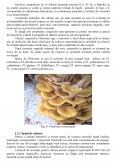 Obtinerea Produselor Biologice la Ciuperci