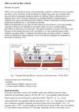 Imagine document Filtre cu Stuf cu Flux Vertical