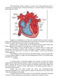 Circulatia sangelui si inima