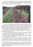 Tescovina Compostata Utilizata Drept Fertilizant
