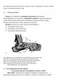 Imagine document Evaluarea somato fuctionala a aparatului locomotor si evaluarea capacitatii de efort